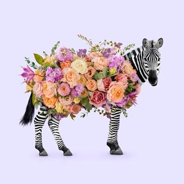 - Moederdagkaart-Zebra-bloemen-Paul-Fuentes