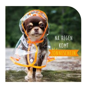 - Beterschapskaart-Grappig-puppy-met-regenjas