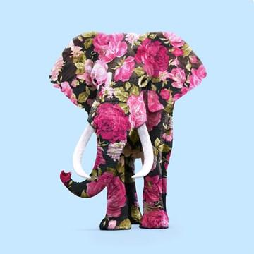 - bloemetjes-olifant-paul-fuentes