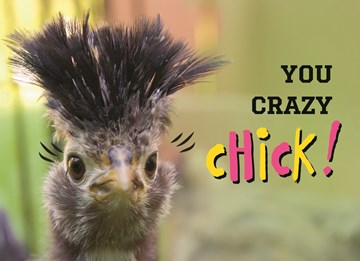 - animal-fiesta-you-crazy-chick