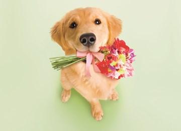 Bedankt kaart - hond-met-bloemen