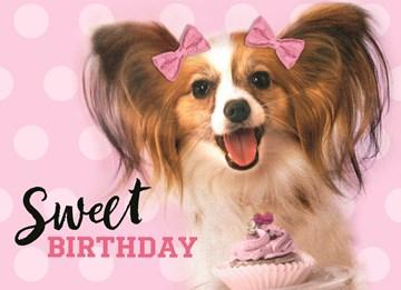 Dierendag kaart - animal-fiesta-sweet-birthday