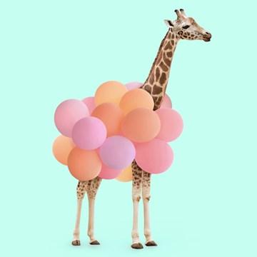 wenskaarten - giraf-met-ballonnen