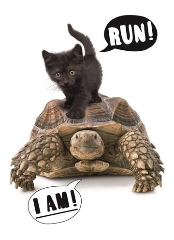 Te laatkaart - te-laat-verjaardag-birthday--schildpad