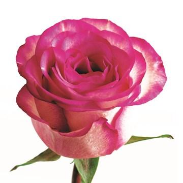 Huwelijkskaart - losse-roos