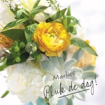 - kaart-pluk-de-dag-met-zonnige-gele-bloemen-
