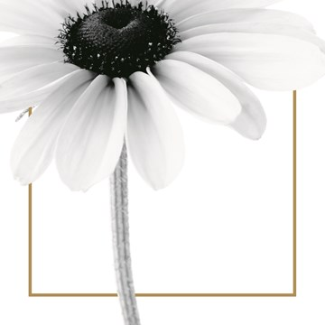 - enkele-witte-bloem-met-goud-randje-