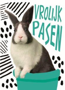 Paaskaart - grappig-paaskonijn-met-een-hippe-achtergrond-vrolijk-pasen