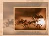 Afbeelding van e-card